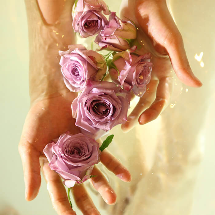 Close-up of female hands holding pink rose flowers in water